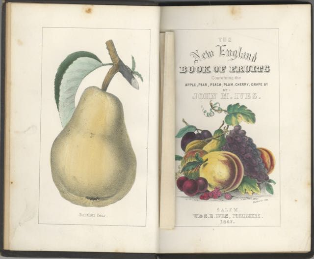 New England Book of Fruit : containing an abridgement of Manning's Descriptive Catalogue of the most valuable varieties of the pear, apple, peach, plum, and cherry, for New England culture. To which are added the grape, quince, gooseberry, current, and strawberry; with outlines of many of the finest pears, drawn from nature; with directions for pruning, grafting, budding, and general modes of culture. Third edition. Revised and enlarged.