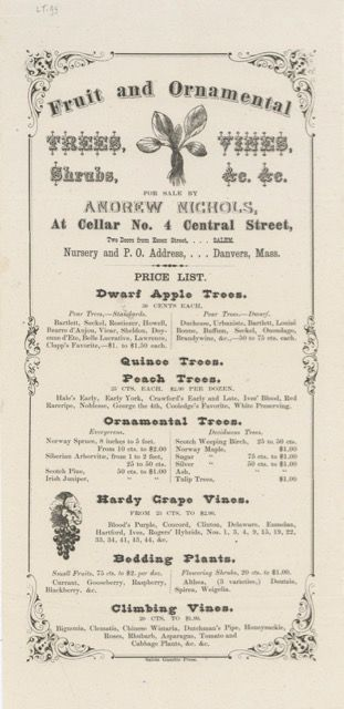Fruit and Ornamental Trees, Vines, Shrubs, &c. &c. for sale by… at Cellar no. 4 Central Street, two doors down from Essex Street. Broadside – American nursery, Danvers Andrew Nichols, Mass.