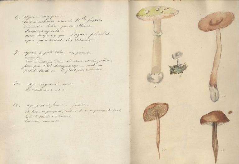 Champignons de l'Ain. Manuscript – mushrooms, Valentin-Smith, Joannes-Erhard